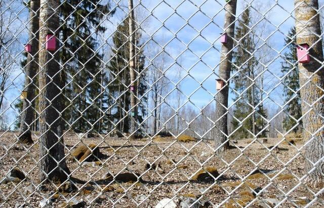 Verkkoaidan takana metsää.